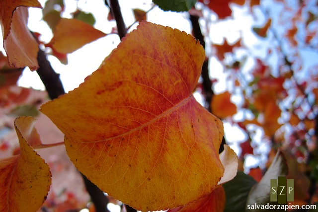 foliage03
